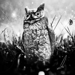 THE OWL by CGDRK