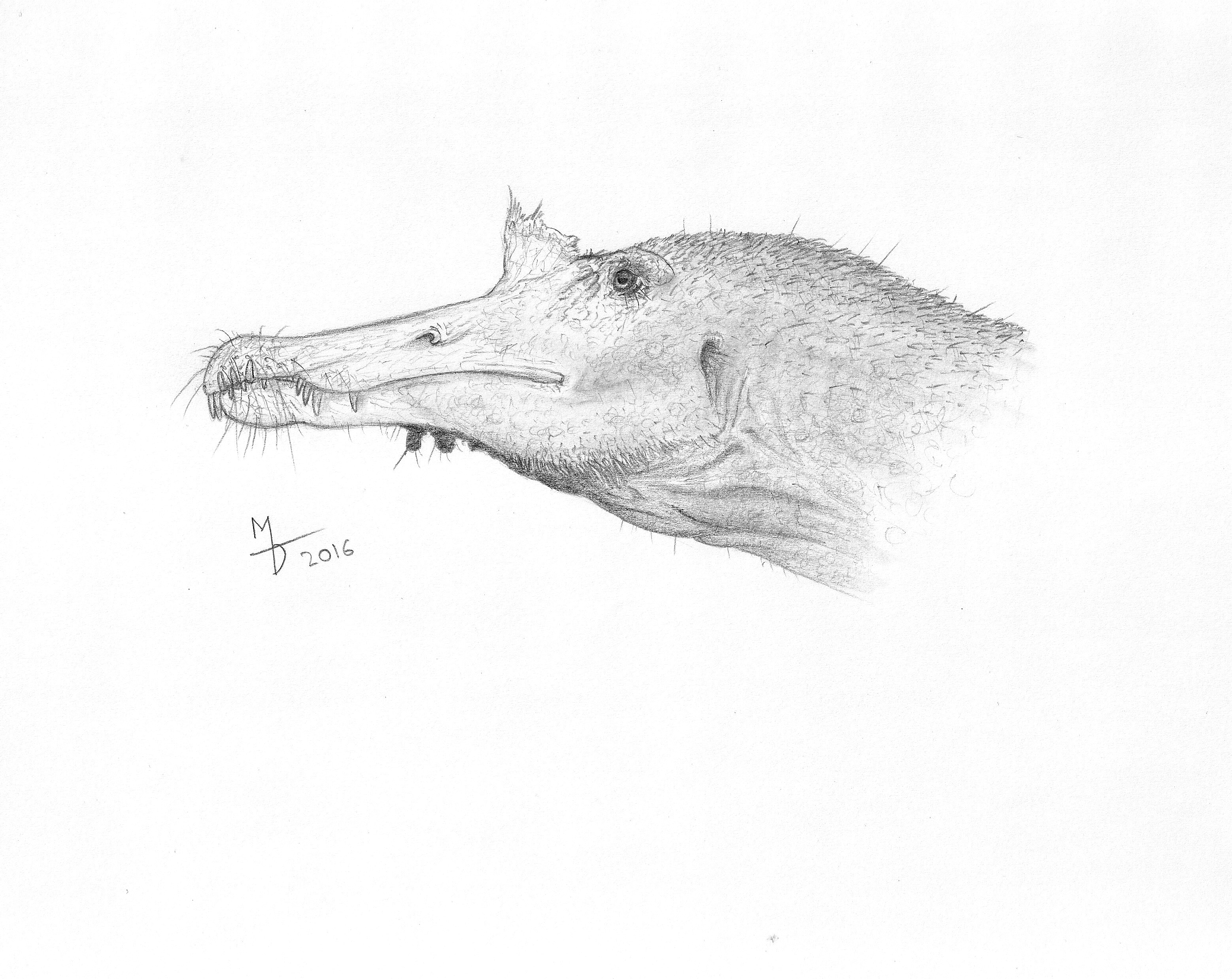 Line Drawing Giraffe : Spinosaurus a. by midiaou on deviantart