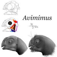 Reconstructing Avimimus by Midiaou