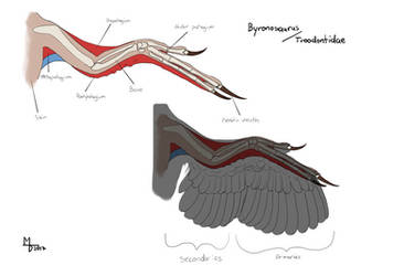 Troodontidae Wing by Midiaou