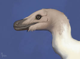 Velociraptor Male in Non-breeding Plumage by Midiaou