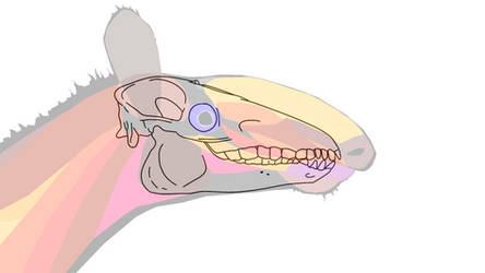 Macrauchenia skull by Midiaou