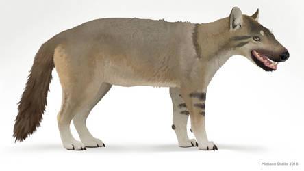 Hyaenodon horridus by Midiaou
