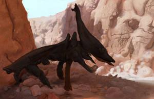 Canyon Shadow