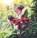 Passion flower 1 by TashaSaati