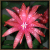 Easter Cactus Flower Icon by cymbidium56