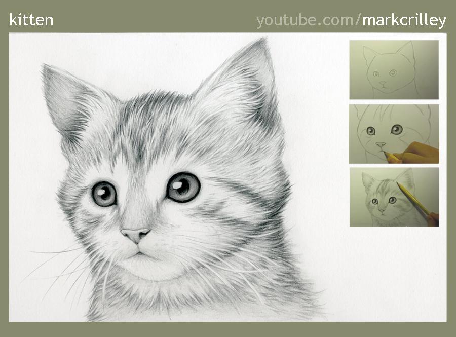 Kitten by markcrilley
