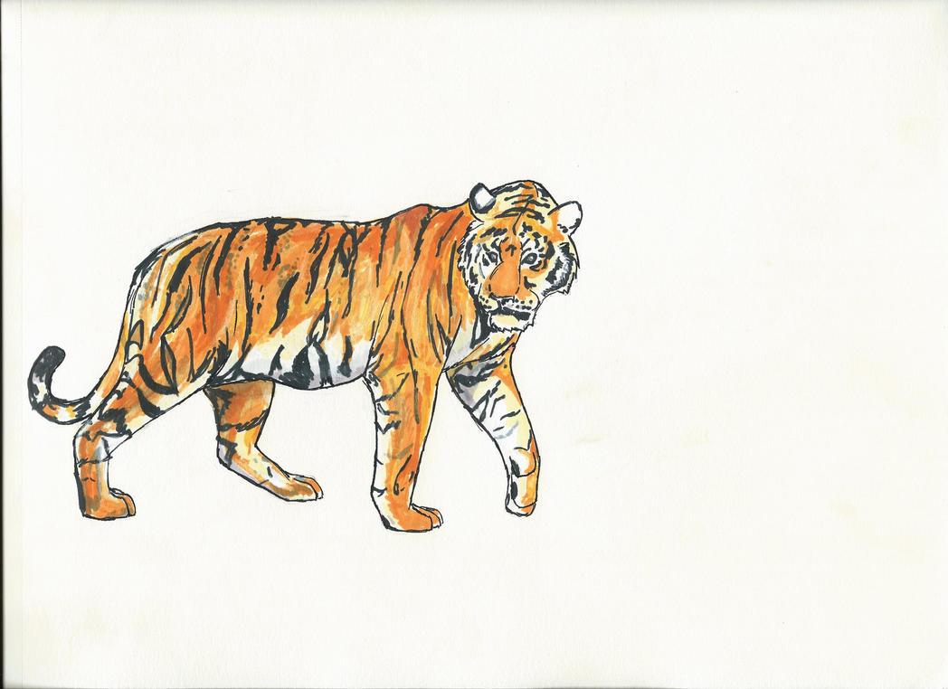 Tiger by Imagayrobot