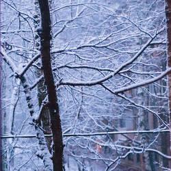 Snow by Ranavern
