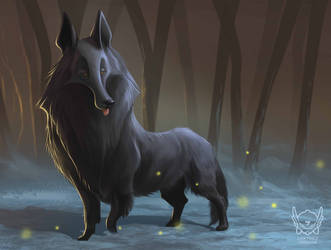 The Belgian Shepherd 1 by jpcorredor