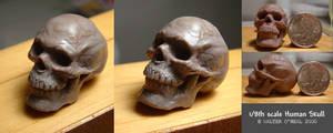 Human Skull - 1:8th scale
