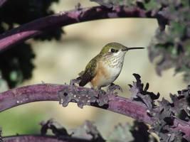 Hummingbird Smile by TricksyWeasel