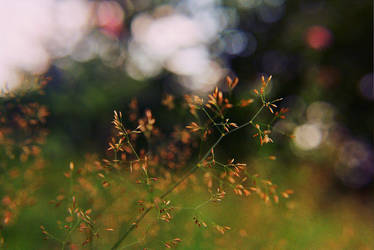 .. .LittLe . woNdeRs. .. by Anotheroutsider