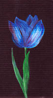 ..tulip. .tulip.. by Anotheroutsider
