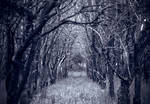 ..Road.. to.. .peRdiTioN...