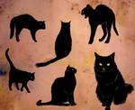 thursday is 6 black cats