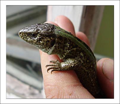 -reptile stock-