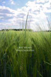 wheat field by mumu145