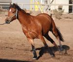 Bay Horse 3