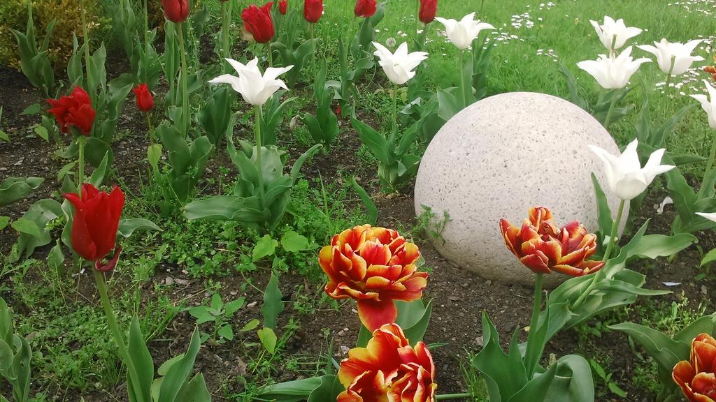 Some tulips near my town 3 by ZalyHeartlessTigress