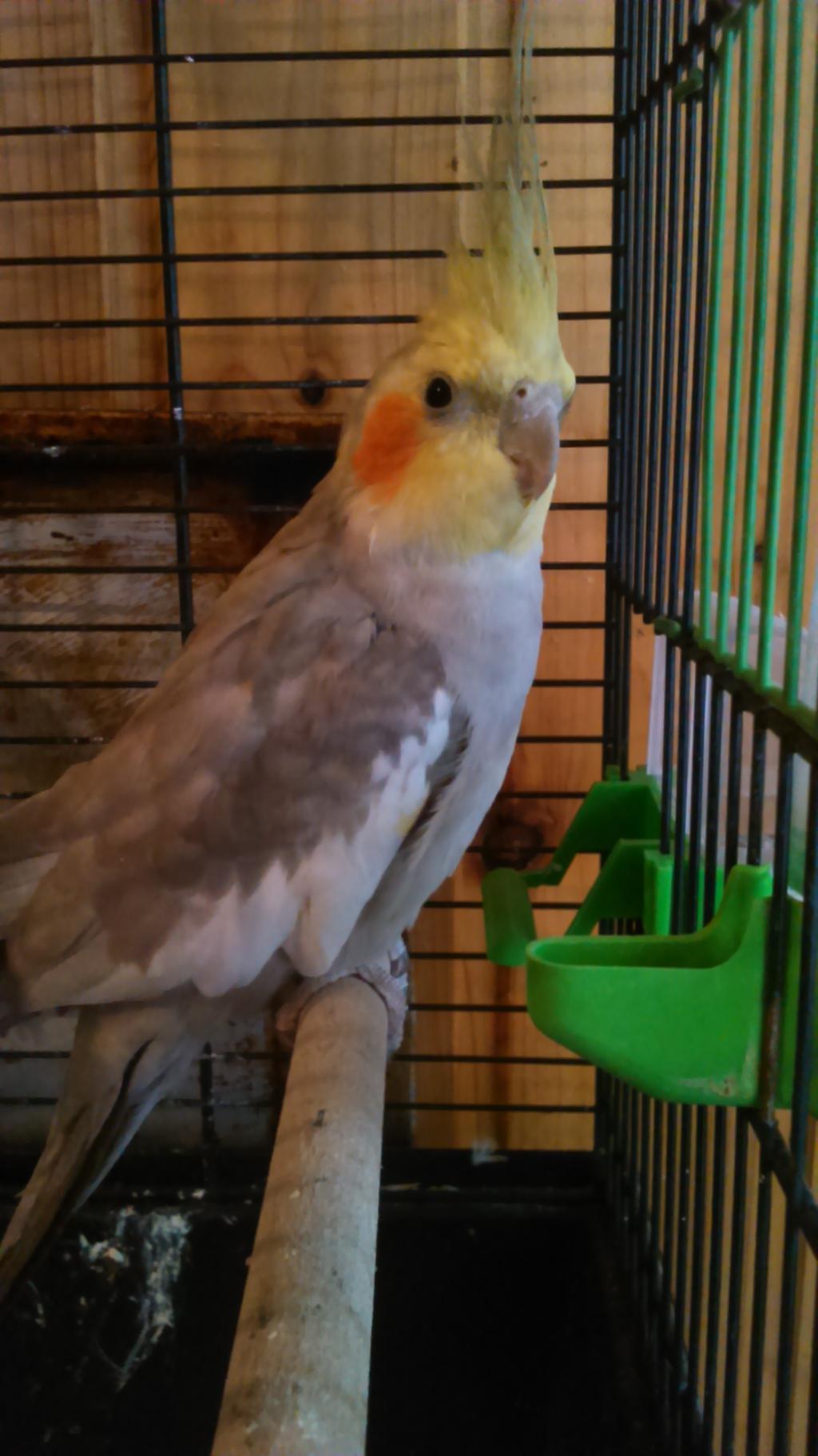 Say hi to birdie by ZalyHeartlessTigress