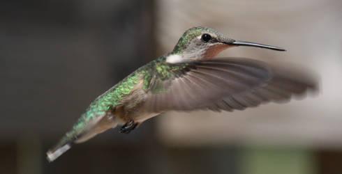 Hummingbird in flight by MercenaryEnclave