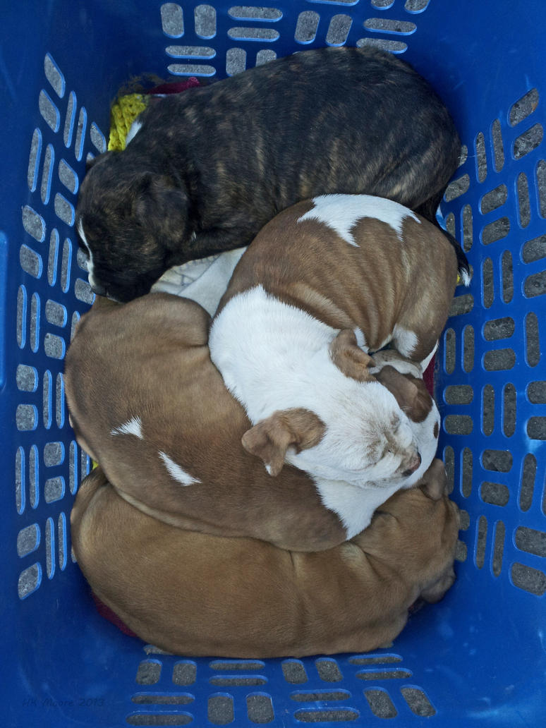 Basket of Puppies by mistakeablyme