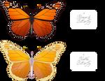 Butterflies of Naath by SyreneadArt