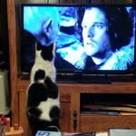Zorro, meet Jon Snow