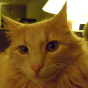 Lionheartssj's Profile Picture