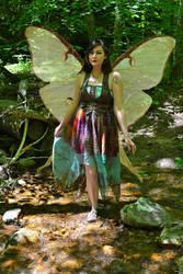 Luna Moth Faerie