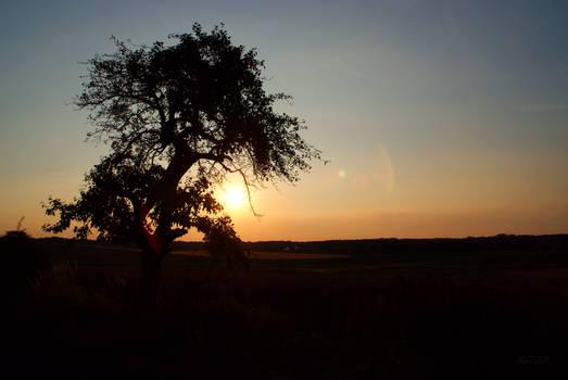 Lonely Tree at Sundown