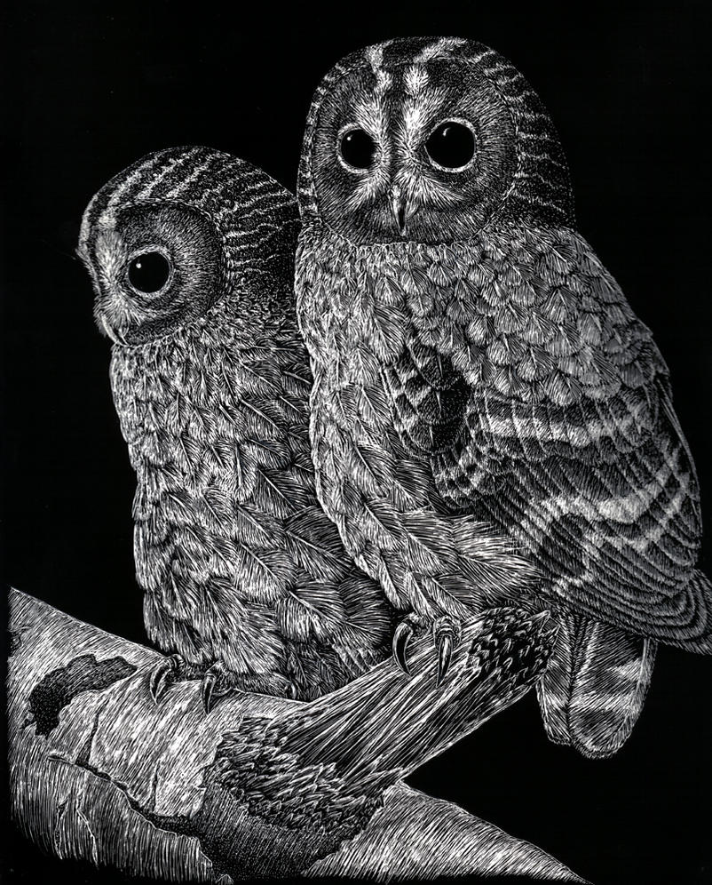 Tawny Owls by Leivre