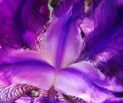 purple love it