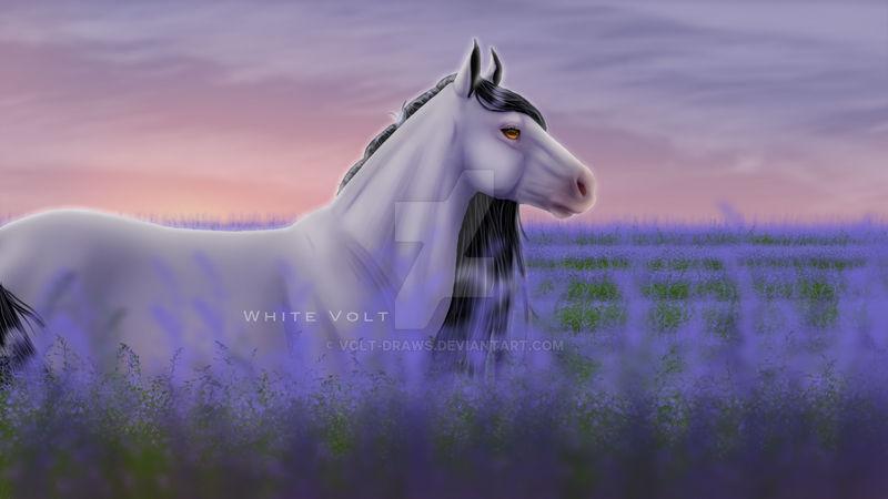 Porosha lavender