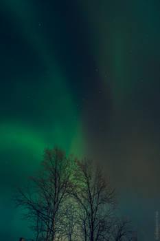 Finland - Aurora Borealis 14