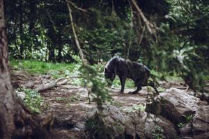 Black Wolf 4