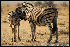 Namibia Wildlife 25 by francescotosi