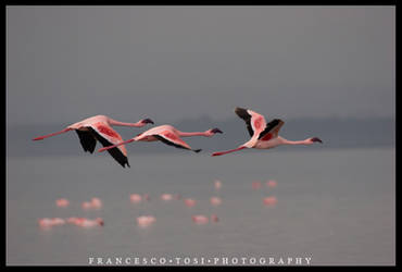Kenya Wildlife 77 by francescotosi