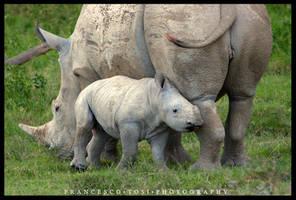 Kenya Wildlife 95 by francescotosi
