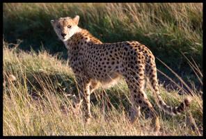Kenya Wildlife 114 by francescotosi