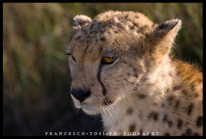 Kenya Wildlife 115 by francescotosi