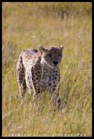 Kenya Wildlife 129 by francescotosi