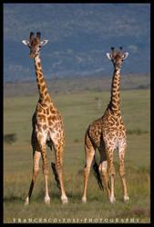 Kenya Wildlife 143 by francescotosi