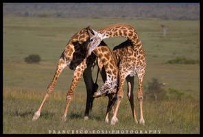 Kenya Wildlife 145 by francescotosi