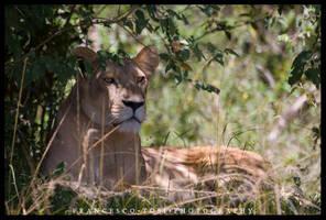 Kenya Wildlife 159