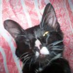 Nero the cat II