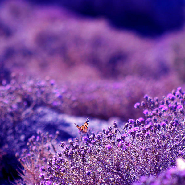 Into The Violet. by OrchidFeehan