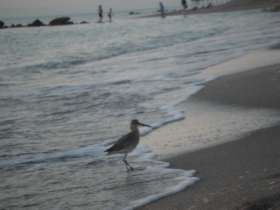 Images Sand Piper Hotel Cape May Nj Room