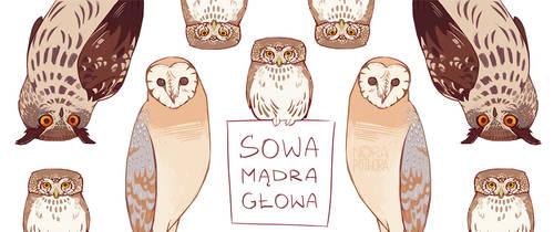 Owls by norapotwora